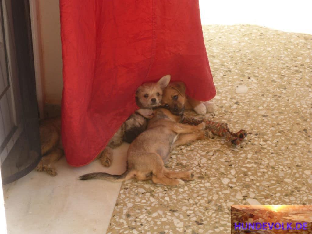 Malia Stray Puppies'