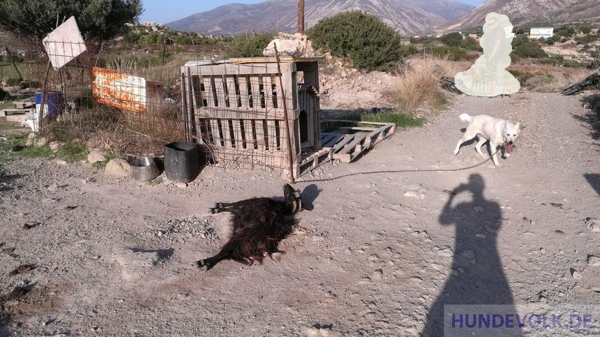 Kettenhunde legal ?