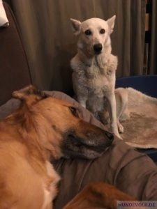 Gerettete Kettenhunde