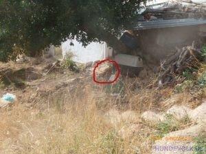 Hund auf dem Hügel Agios Haralampos (Agios Nikolaos)