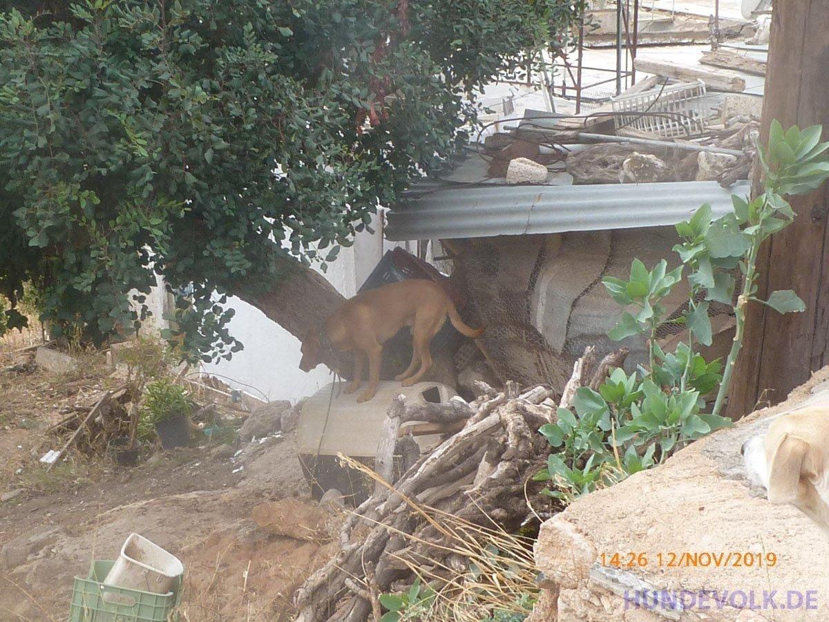 Hund auf dem Hügel Agios Haralampos