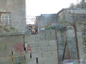 Tiermissbrauch Neapoli