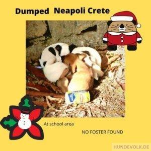 Nikolaus-Welpen von Neapoli