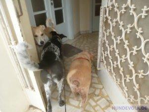 Rückkehr vom zwei Hunden vom Tierarzt-Besuch