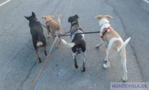 Ein Rudel voller Hunde