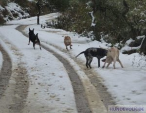Rudel im Schnee