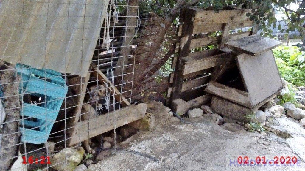 Hund unter unmöglichen Bedingungen gehalten