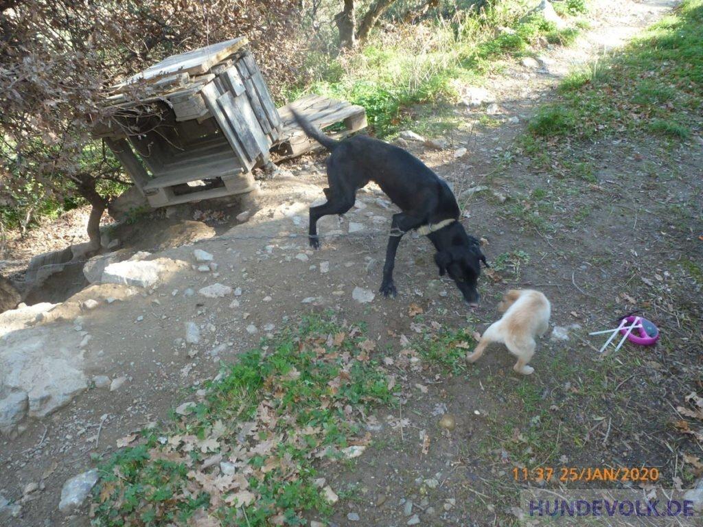 Kettenhund und Welpe in den Bergen