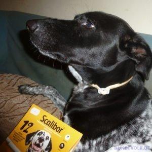 Hund trägt ein Schutzhalsband