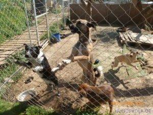 Hunde in Nikos Bronx Familia Tierheim