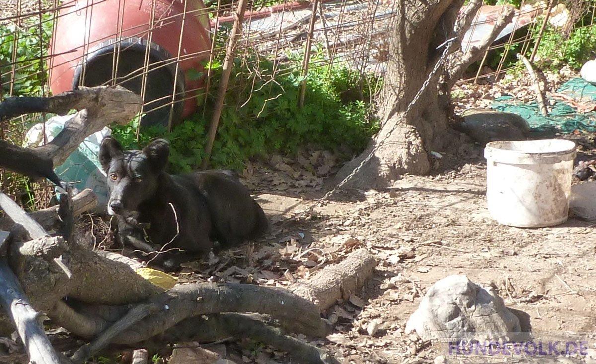 Kettenhunde in der Corona-Krise