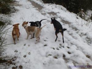 Hunderudel im Schnee