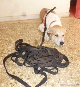Hund und seine Schleppleine